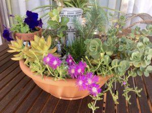 Mi pequeño jardín de Cerralbo en la actualidad