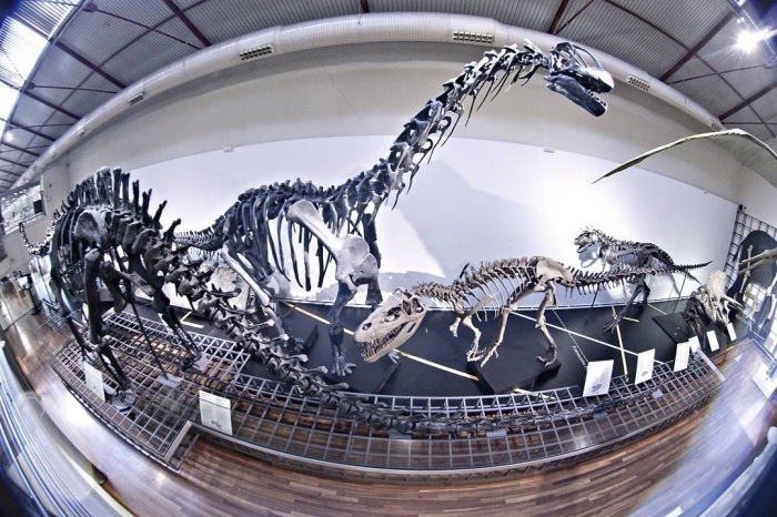 © Museo Nacional Ciencias Naturales