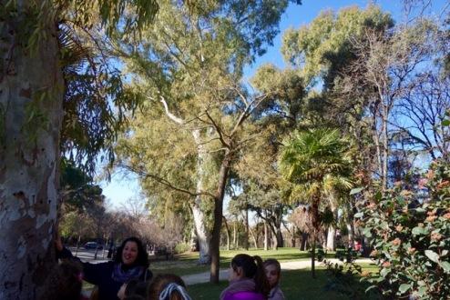 El Retiro. Árboles. Usos asombrosos de los árboles.