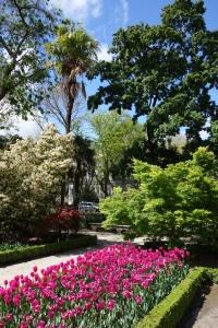 Tulipanes. Real Jardín Botánico de Madrid