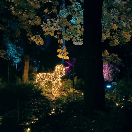 Luces Del Real Jardin Botánico